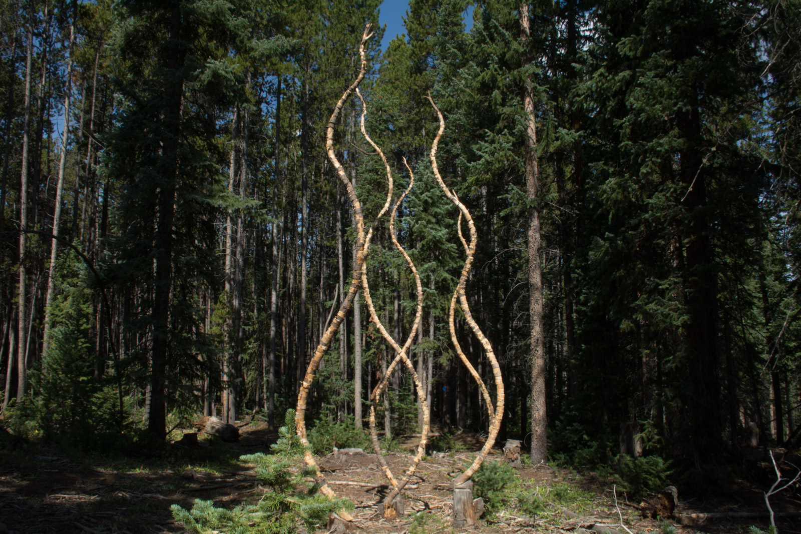 Trail Mix - 2015 Sculpture called Hume's Guillotine built on the Moonstone Trail
